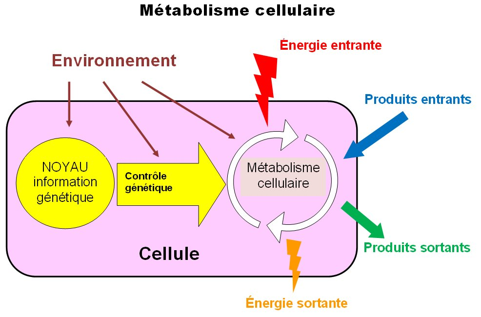 le métabolisme cellulaire et son contrôle 2nde SVT