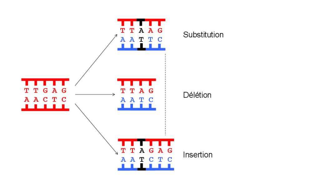 Schéma d'une mutation